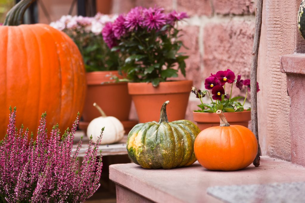 To Do Liste im Gartenmonat Oktober