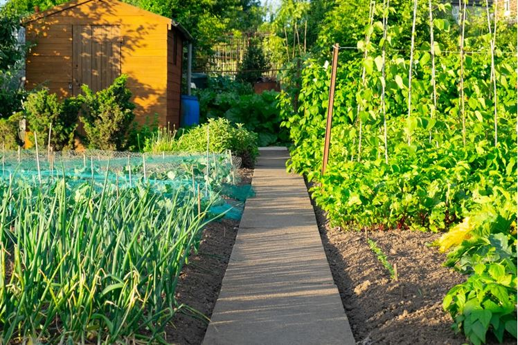 How to Organize a Community Garden